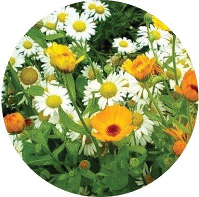 Травы для ванн «Нежная кожа» 100 г. 6 шт. в гофрокоробе