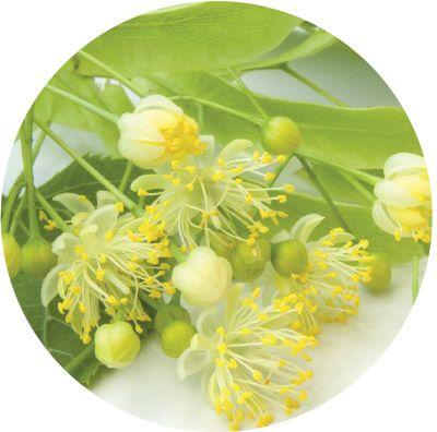 Черный чай с цветками липы «Императорский чай», 25 пакетиков, 32 шт.